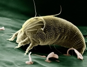 Microscopic Bugs That Live On Humans